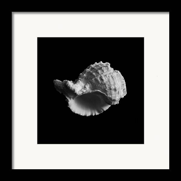 Seashell Framed Print featuring the photograph Shell No.3 by Henry Krauzyk