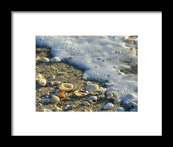 Shells Framed Print featuring the photograph Shells And Seafoam by Peggy King