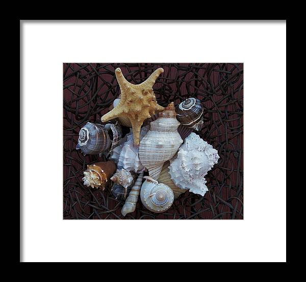 Photo Framed Print featuring the photograph Shells In A Basket ll by Marsha Heiken