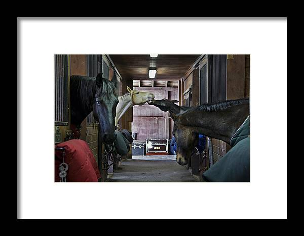 Horse Framed Print featuring the photograph Shenanigans by Jack Goldberg