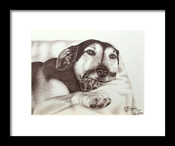 Dog Framed Print featuring the drawing Shepherd Dog Frieda by Nicole Zeug