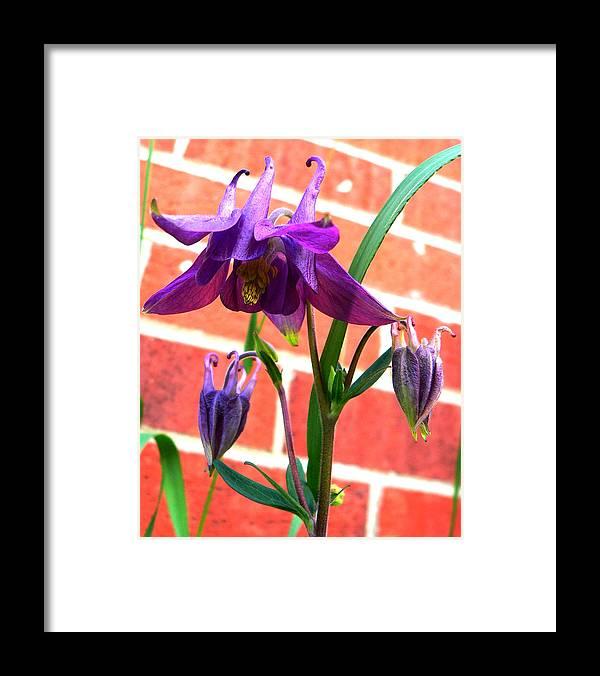 Purple Framed Print featuring the photograph Shepherd by Doug Norkum