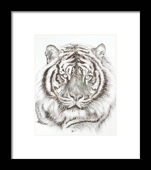 Big Cat Framed Print featuring the drawing Shimmer by Barbara Keith