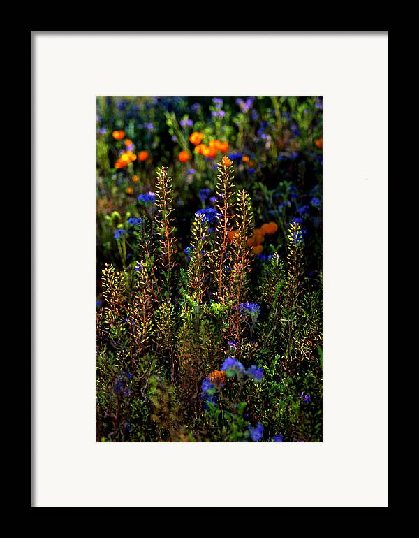 Flowers Framed Print featuring the photograph Shimmers by Randy Oberg