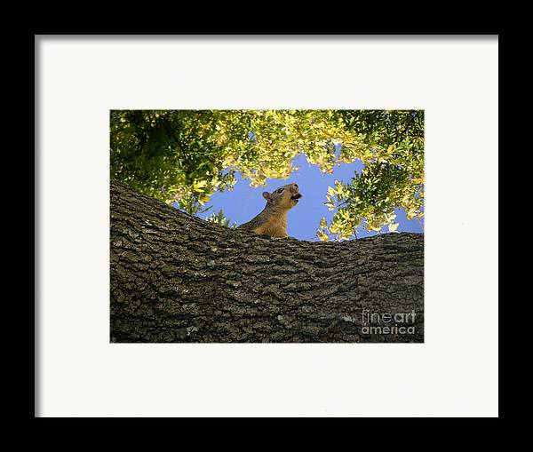 Nature Framed Print featuring the photograph Show But Not Tell by Lucyna A M Green