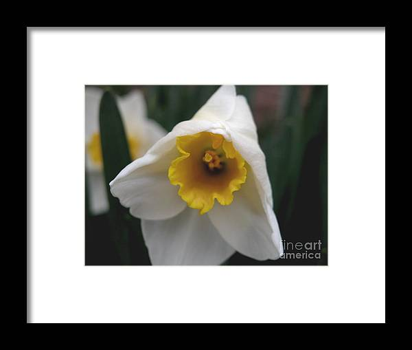 Flower Framed Print featuring the photograph Shy by Michelle Hastings