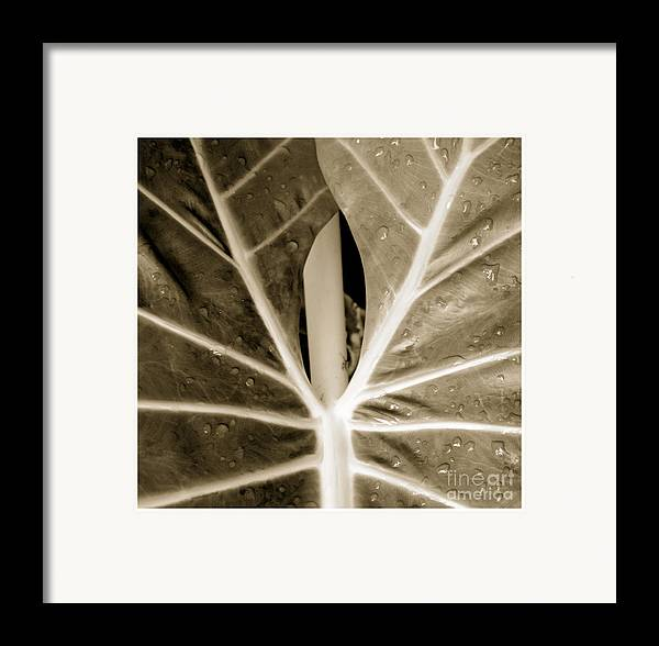 Beauty Flower Framed Print featuring the photograph Shy by Son Of the Moon