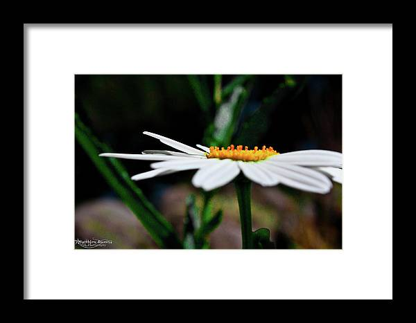 Framed Print featuring the photograph Side Of A Daisy by Matthieu Russell