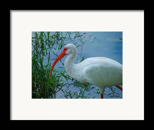 Bird Framed Print featuring the photograph Side Profile by Judy Waller