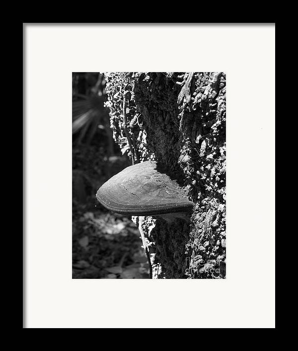 Nature Framed Print featuring the photograph Side Ways by Stephanie Richards