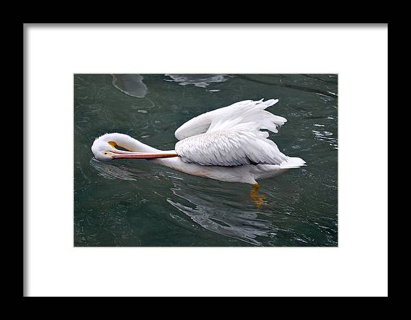 Teresa Blanton Framed Print featuring the photograph Sidestroke by Teresa Blanton