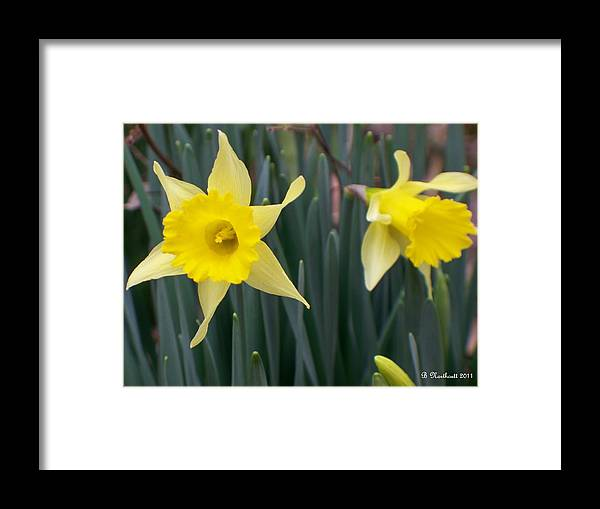 Daffodil Framed Print featuring the photograph Sign Of Spring by Betty Northcutt