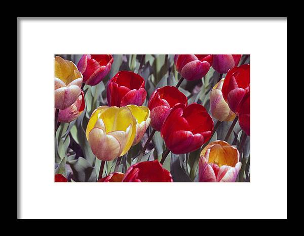 Flowers Framed Print featuring the photograph Signs Of Sping by Charles Wood II