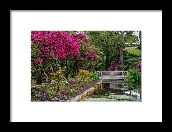 Flowers Framed Print featuring the photograph Signs Of Spring by Adrian Evans