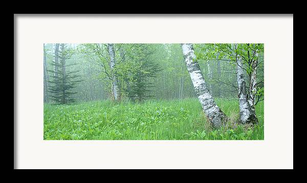 Landscape Framed Print featuring the photograph Silent Birch by Bill Morgenstern