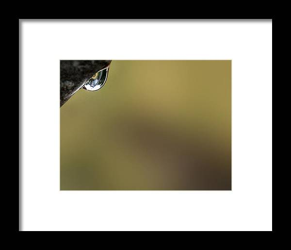 Raindrop Framed Print featuring the photograph Silent Observation by Marilynne Bull