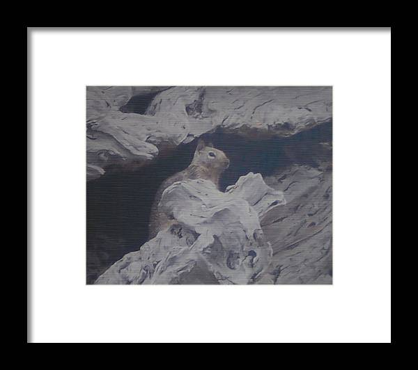 Squirrel Framed Print featuring the photograph Silent Observer by Pharris Art