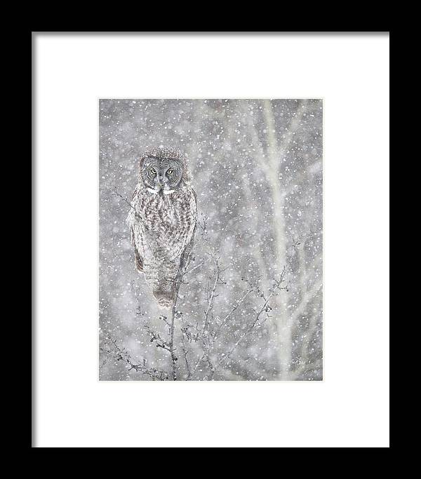 Owl Framed Print featuring the photograph Silent Snowfall Portrait by Everet Regal