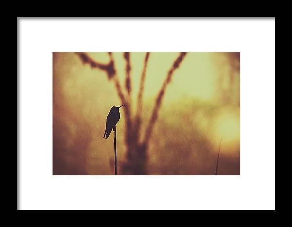 Agile Framed Print featuring the photograph Silhouette Of A Hummingbird Against Golden Background, Mindo, Ecuador by Srdjan Kirtic