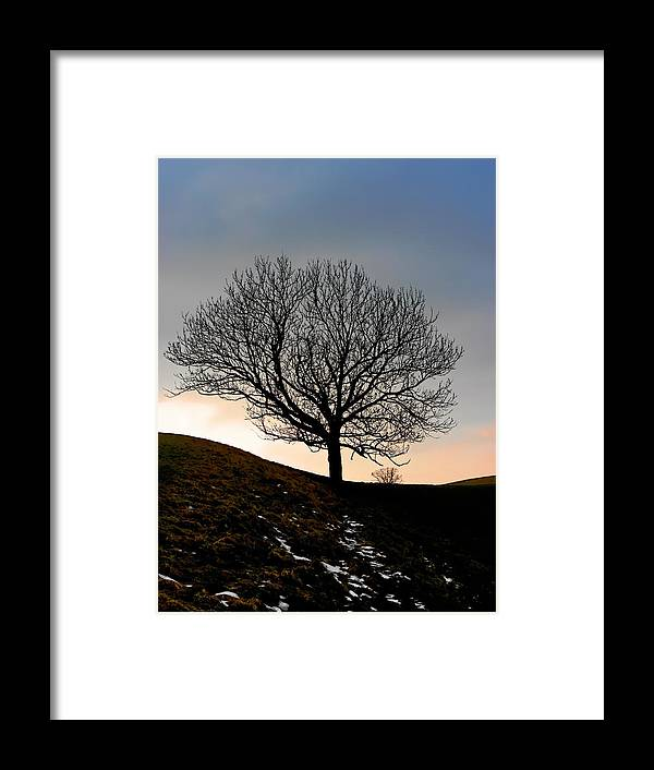 Tree Framed Print featuring the photograph Silhouette Of A Tree On A Winter Day by Christine Till