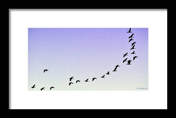 2d Framed Print featuring the photograph Silhouetted Flight by Brian Wallace
