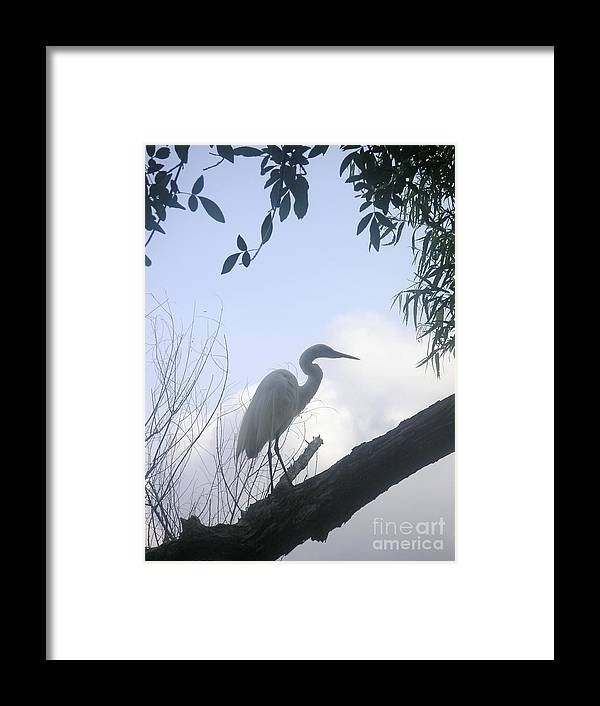Nature Framed Print featuring the photograph Silhouettes Against The Morning Sky by Lucyna A M Green
