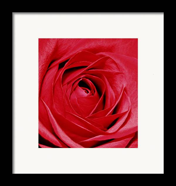 Flowers Framed Print featuring the photograph Silky Petals by Cathie Tyler