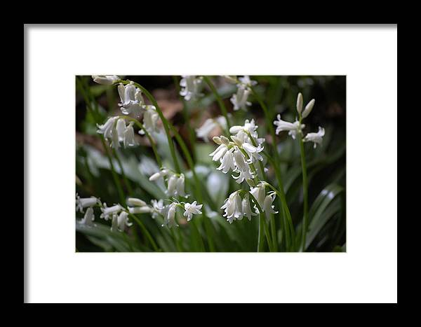 Landscape Framed Print featuring the photograph Silver Bells by David Lane