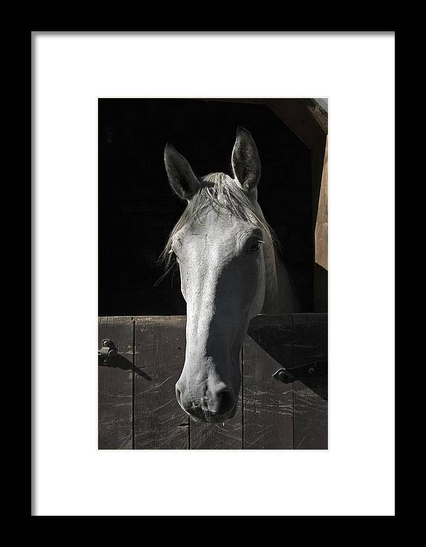 Horse Framed Print featuring the photograph Silver by Jack Goldberg
