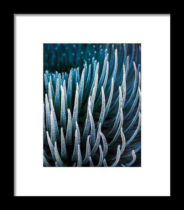 Haleakala National Park Framed Print featuring the photograph Silversword by Thorsten Scheuermann