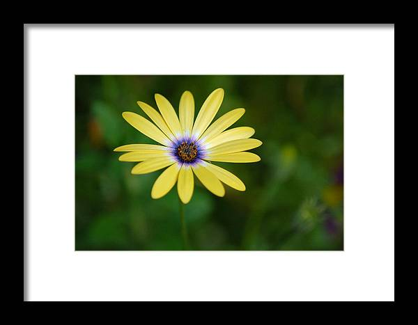 Flower Framed Print featuring the photograph Simple Flower by Jennifer Englehardt