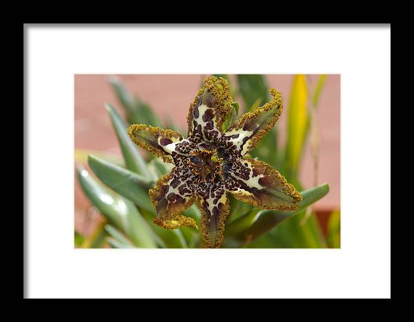 Garden Framed Print featuring the photograph Simply Amazing by Veron Miller