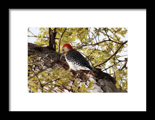 Framed Print featuring the photograph Simply Red by Mark Dibble