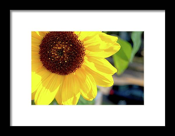 Sunflower Framed Print featuring the photograph Simply Sunflower by Marcus L Wise