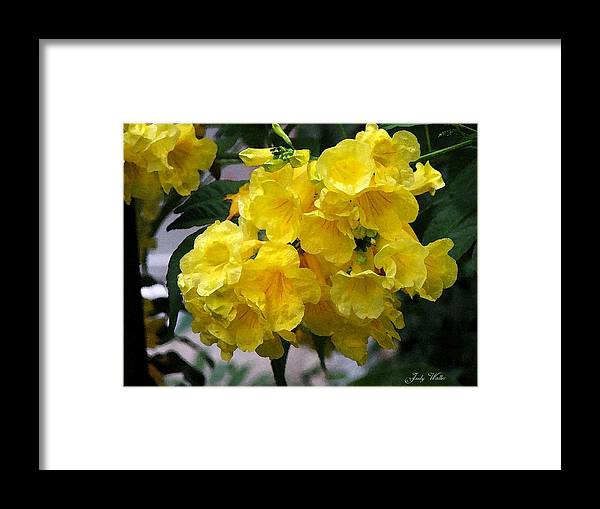Yellow Framed Print featuring the photograph Simply Yellow by Judy Waller