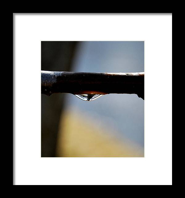 Rain Drop Framed Print featuring the photograph Single Drop by Marilynne Bull