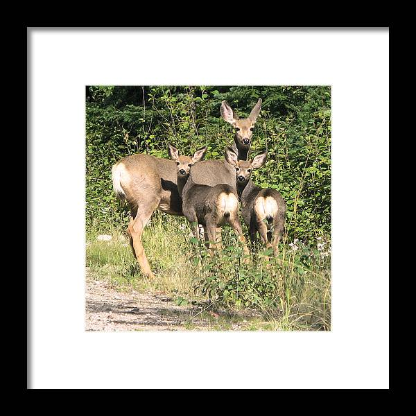 Deer Framed Print featuring the photograph Single Mom by Robert Bissett