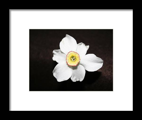 Flower Framed Print featuring the photograph Single Spring Flower by Susan Pedrini