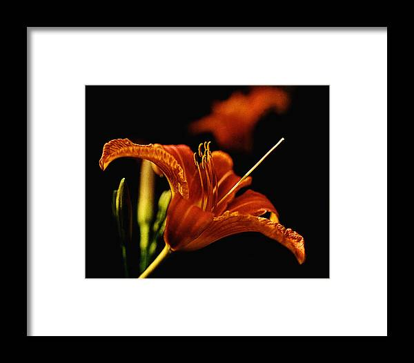 Garden Framed Print featuring the photograph Single Tiger Lily by Roger Soule