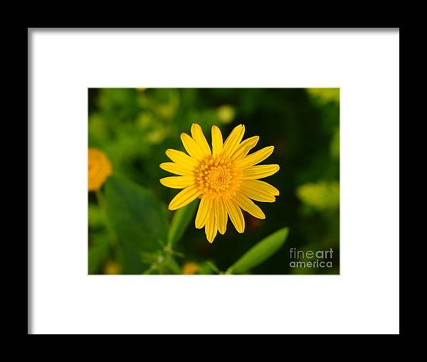 Garden Framed Print featuring the photograph Single Yellow by Judy Waller