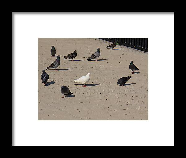 Bird Framed Print featuring the photograph Singled Out by Stephanie Richards
