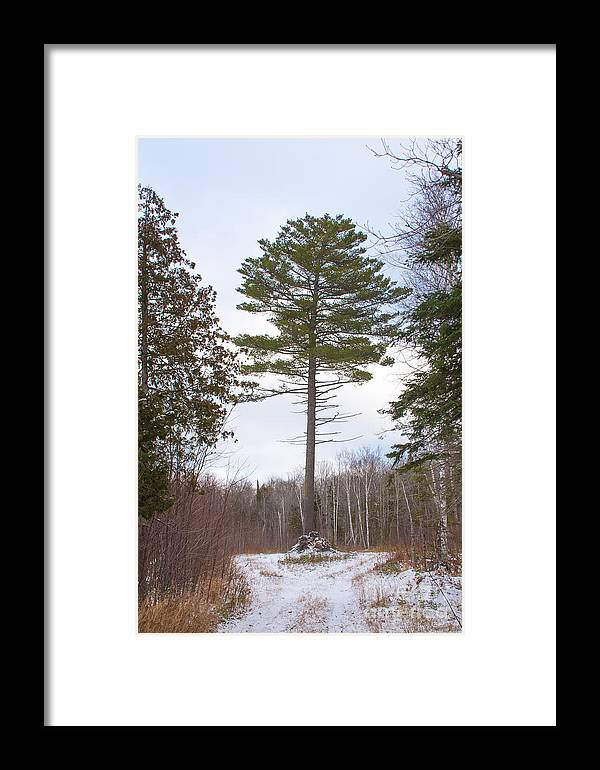 Snow Framed Print featuring the photograph Singled Out by Wesley Farnsworth