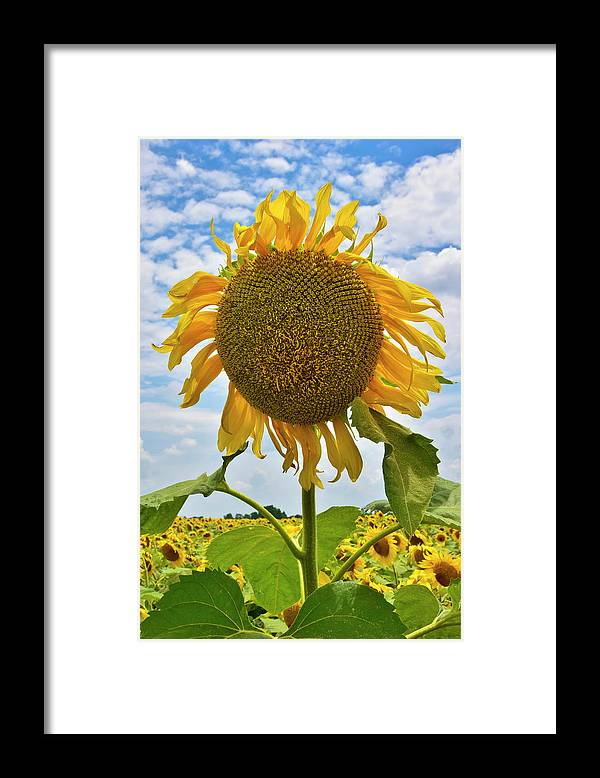 Sister Golden Hair Framed Print featuring the photograph Sister Golden Hair by Skip Hunt
