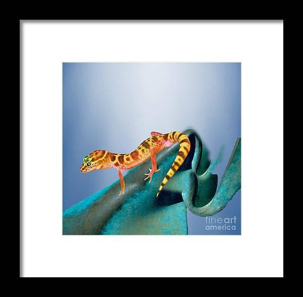Wildlife Framed Print featuring the painting Sit'n On Desert Throne by Belinda Threeths