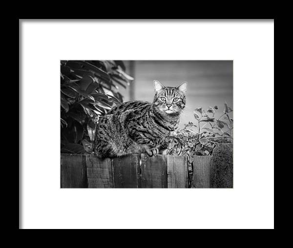 Cat Framed Print featuring the photograph Sitting On The Fence by Nick Bywater