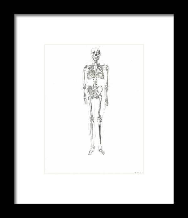Framed Print featuring the drawing Skeleton by Joseph Arico