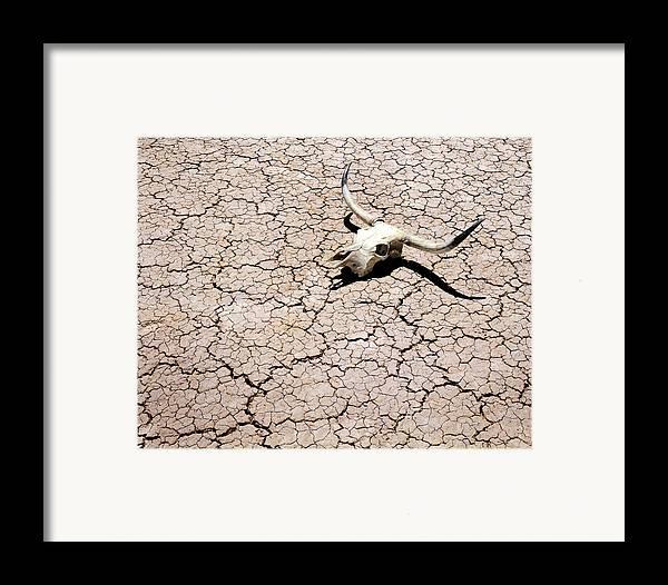 Desert Framed Print featuring the photograph Skull In Desert 2 by Kelley King