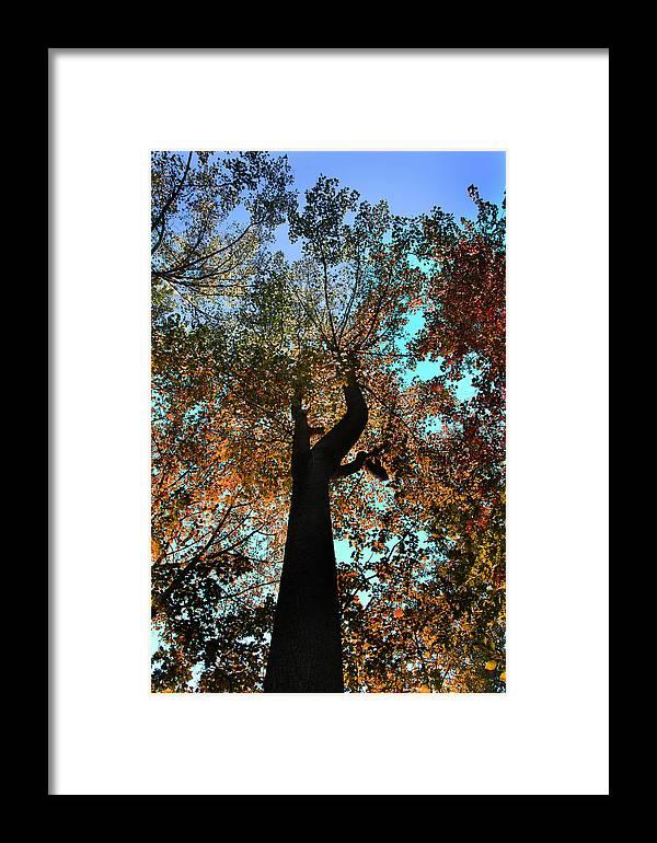 Fall Framed Print featuring the photograph Sky Flower by Joseph G Holland