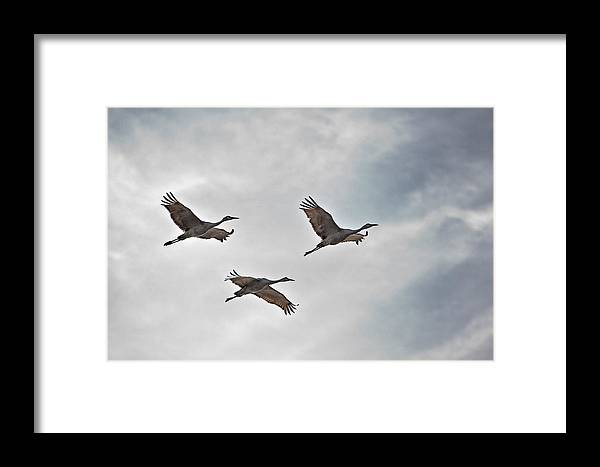 Nature Framed Print featuring the photograph Sky High Sandhills by Charlie Osborn