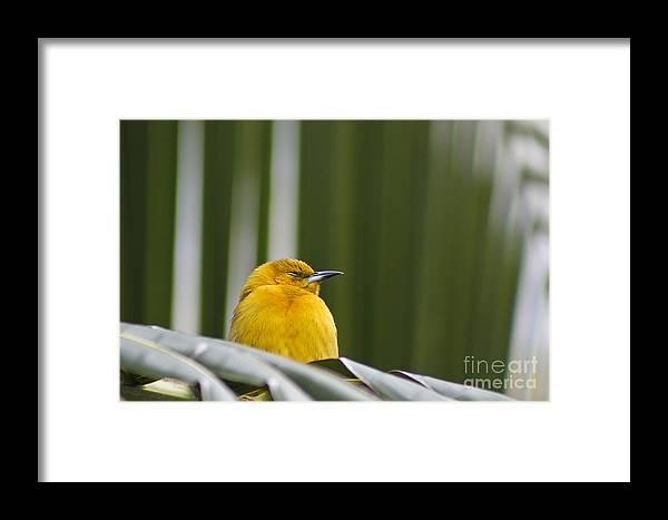 Bird Framed Print featuring the photograph Sleep Little One by Teresa Zieba
